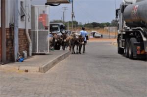 Donkeys parked by petrol station
